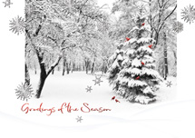 Songbird Season Holiday Cards